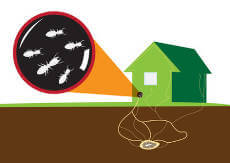 Ameisen ganz einfach loswerden - so geht\'s: - Ameisen im Haus