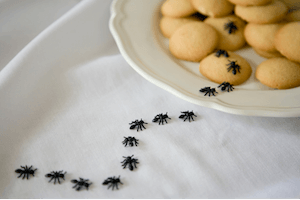 Ameisen in der Küche - Ameisen im Haus